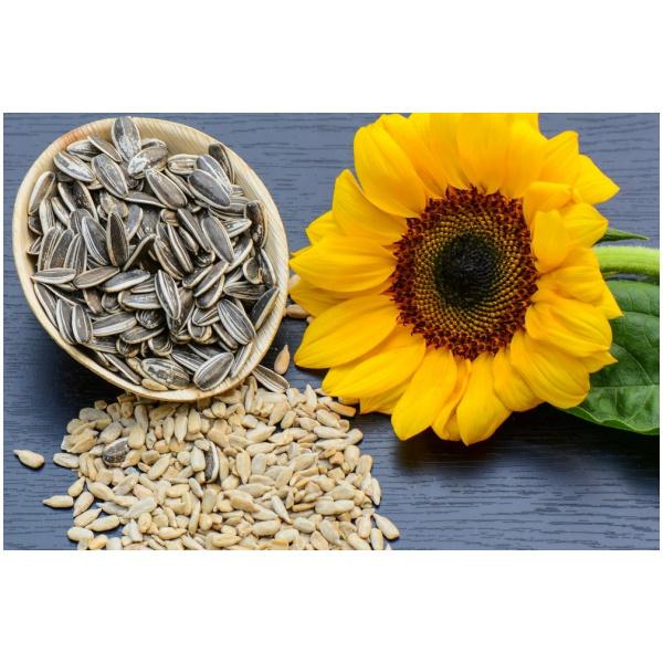 Buy sunflower seeds online
